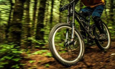 Pine Tree Trails