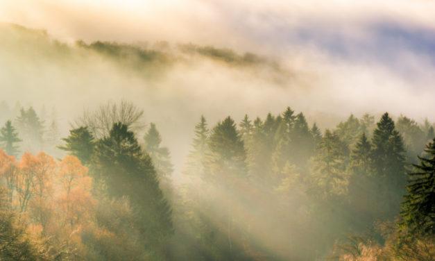Externsteine Teutoburger Wald Lippe
